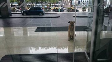 Persistent Puppy — Flight attendant adopted a stray dog that kept waiting outside her hotel every day