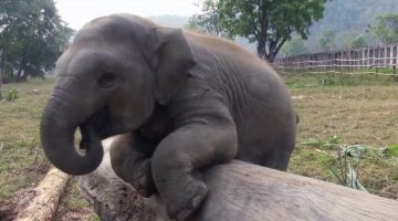 Check out the baby elephant when he notices the camera, he does the most adorable thing!