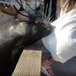 Cameraman reveals why sea lion dragged tourist's daughter into water like a rag doll