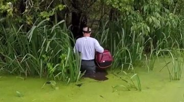Cat stranded for 4 days in deadly swamp is finally rescued by one brave man