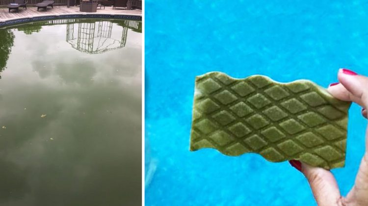 Grandmother Goes Viral After Cleaning Green Pool With Single Magic Eraser