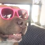 Dog Screams Like A Human When He's Happy Or Excited