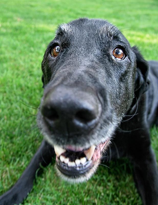 2016.08.24-Doggo03