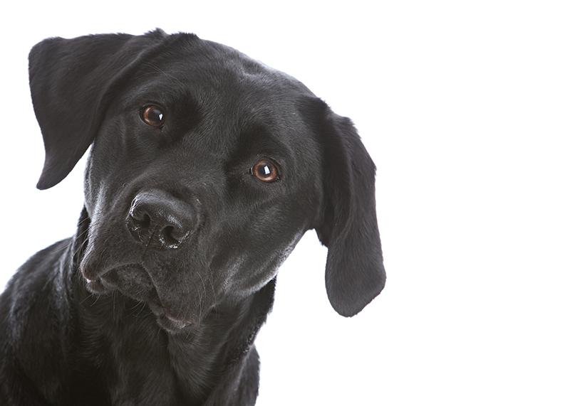 2016.08.24-Doggo04