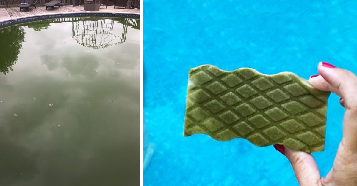 Grandmother Goes Viral After Cleaning Green Pool With